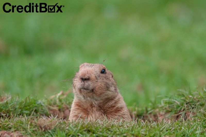 Things You Never Knew About Groundhog Day